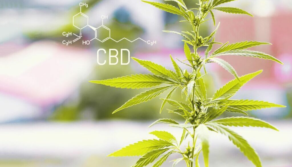 "The CBD ""Industry"" Is Here To Stay"